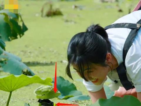 向往的生活摆拍多明显?张子枫只站摄像机前挖藕,真当观众看不见