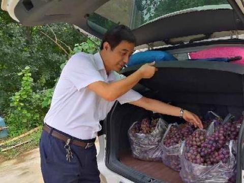 贫困户20亩葡萄滞销,叶县农商行职工上门购买扶贫