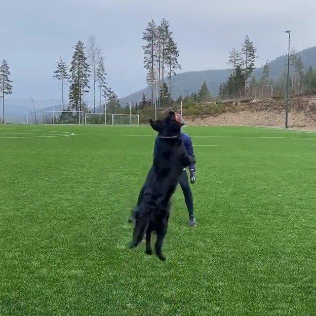 刷爆海外社交网络的Mathias Berntsen与汪星人打排球视频……