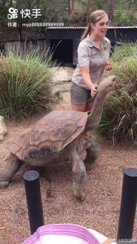 """""""最长寿乌龟"""",据说是从乾隆活到现代……"""