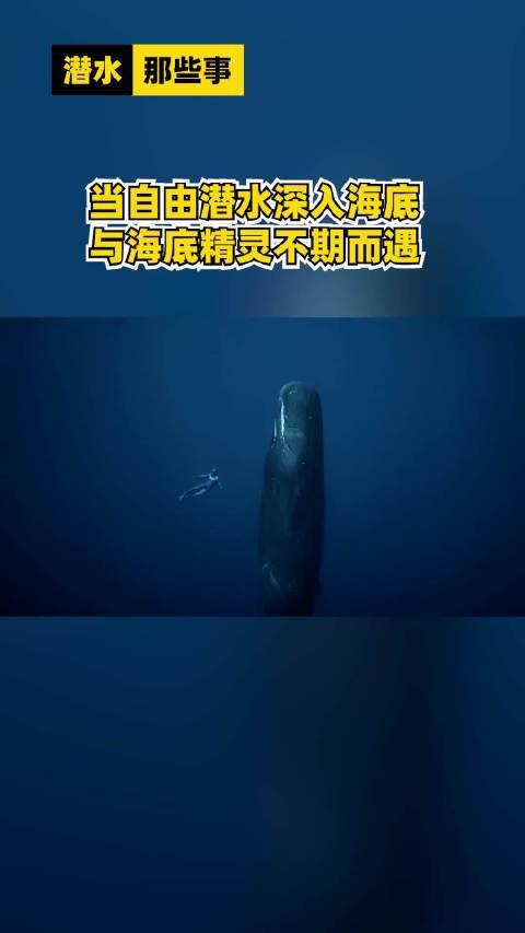 当自由潜水深入海底与海底精灵不期而遇