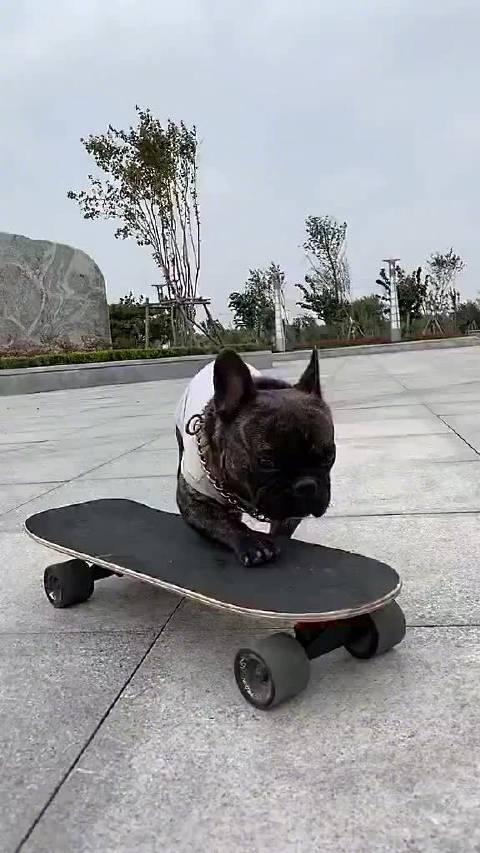 啊这个狗狗也太酷了吧,滑得比我好多了,淦!怎么还会转弯