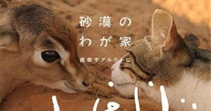 远嫁迪拜的日本女生,在自家圈5万㎡沙漠专为养猫!遍地猫砂盆么