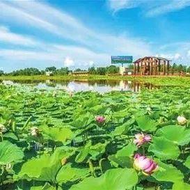 新青国家湿地公园被评为国家4A级旅游景区