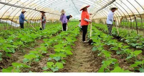 安徽安庆大观区:分类施策 抗灾减灾 恢复生产
