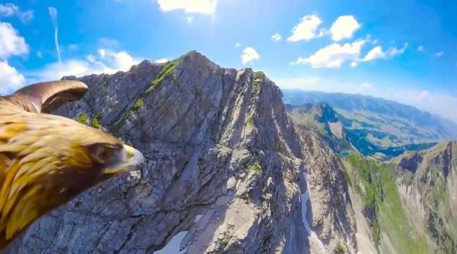 一只鹰飞跃阿尔卑斯山,世界美不美完全取决于你的高度和视角!
