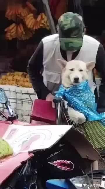 街上一老爷爷为了不让狗狗淋到雨……