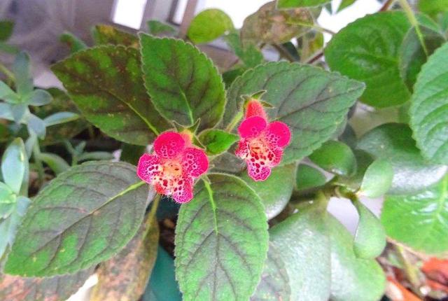 一种花名字个性开花更奇特,养在室内当宝贝,开花时太惊艳