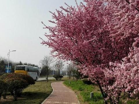 """山东""""最低调""""的公园,无需门票游人爆满,人称""""青岛后花园"""""""