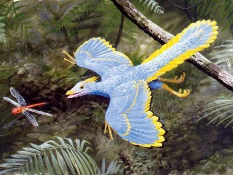 始祖鸟到底是龙是鸟 始祖鸟到底是不是鸟类的祖先