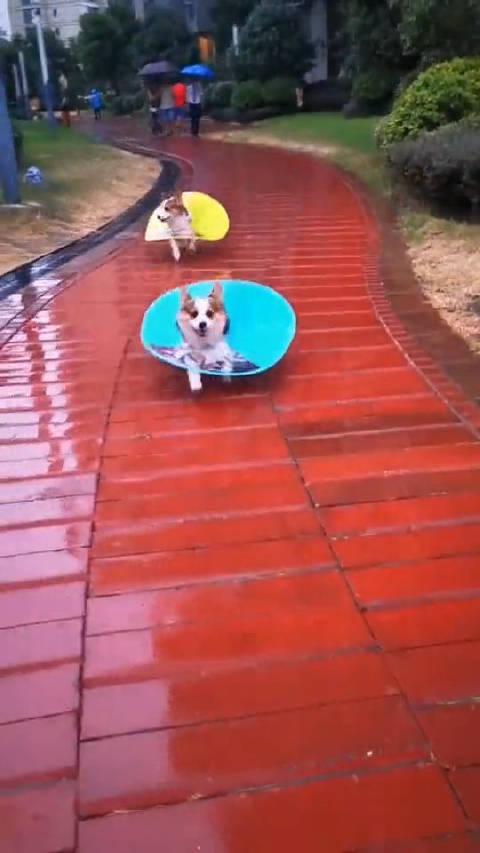 狗子:雨衣有了,就差一顶帽子!