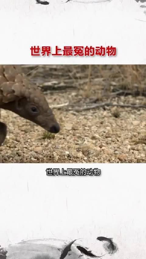 世界上最冤的野生动物——穿山甲……
