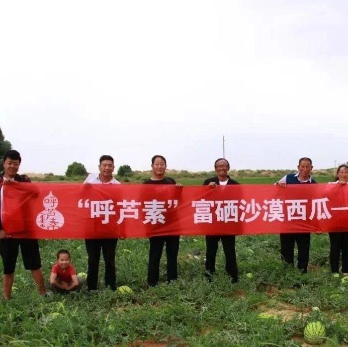 呼芦素淖日农民渴望自产的农产品贴上自己的品牌