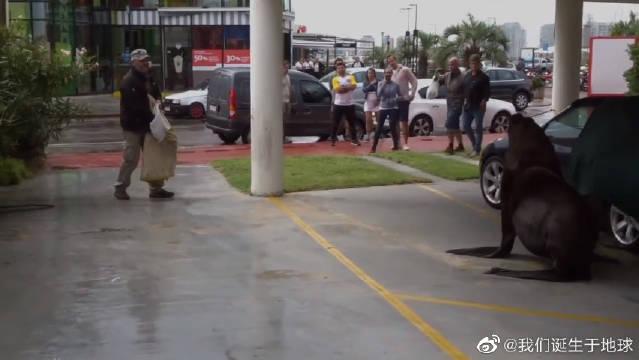 视频:海狮跑到敞篷车上睡觉,车主真是哭笑不得!海狮:用用你车咋了……