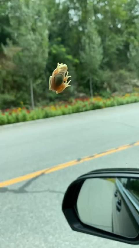 这不是旅行的青蛙吗?🐸