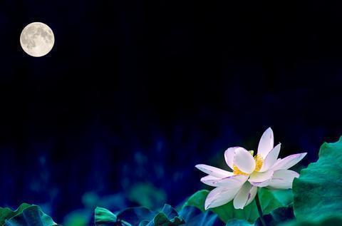 一行禅师经典语录32句,了解佛陀,去除执著,创造正念的奇迹!