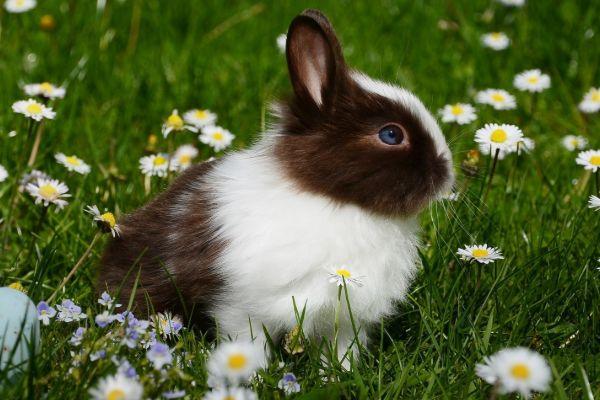 """十只兔子有九个祝福 特别是75岁的""""大金兔"""" 它"""