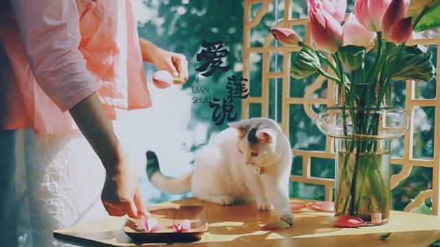 爱莲说 —— 暑夏荷花入茶, 这是属于八月的香气~