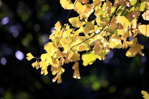 李波中医育儿:入秋后天气逐渐变得干燥起来,如何让宝宝摆脱秋燥