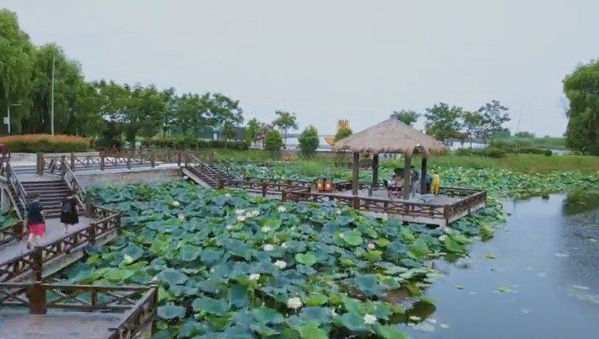 焦岗湖旅游资源丰富,其景区环境优美,气候宜人……