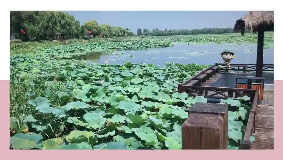 焦岗湖是国家4A级旅游景区、国家湿地公园、国家水利风景区……