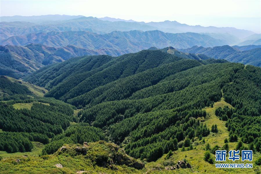 内蒙古苏木山:绿意浓浓景色美