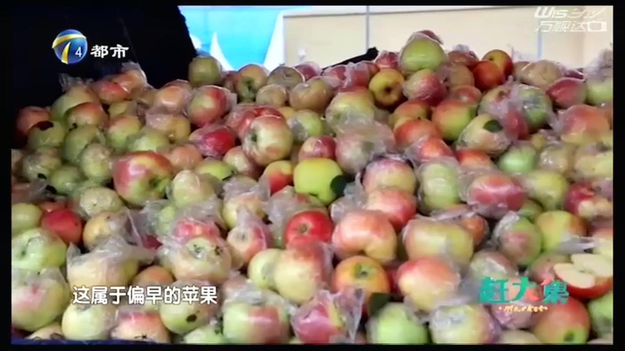 茉莉丝苹果大量上市,个头大、口感酥绵,肉甜核小!