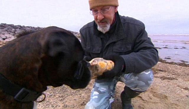 狗狗冲着石缝吠叫不止,主人翻开石头一看,直言捡到宝贝了