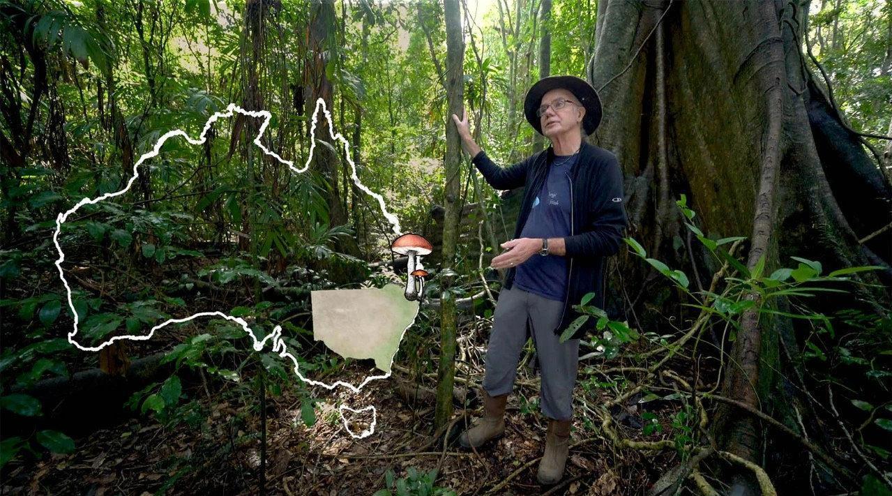 澳大利亚摄影师Stephen Axford痴迷于蘑菇……