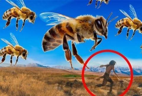意大利百万蜜蜂死亡,引发网友热议!