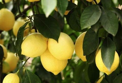 炎热的夏季,喝上杯柠檬蜂蜜水,既能生津解渴,还有美白的功效