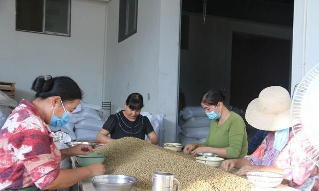 保山隆阳走咖啡精品路线打造庄园经济