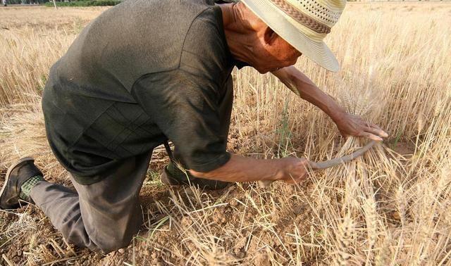 农民尽快脱贫致富 尽快改