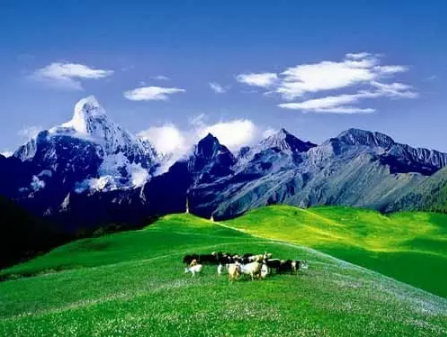 <strong>2020想去中国四川旅游的景点:青城山、若</strong>