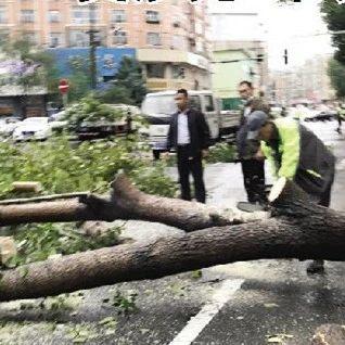 """""""美莎克""""来袭,市区多棵绿化树""""受伤"""""""