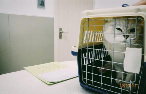 猫咪没正常大小便带医院检查,医生:尿道炎膀胱炎从这几点判断!