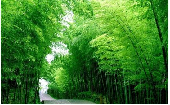 2020想去中国四川旅游景点:九华山猿王洞