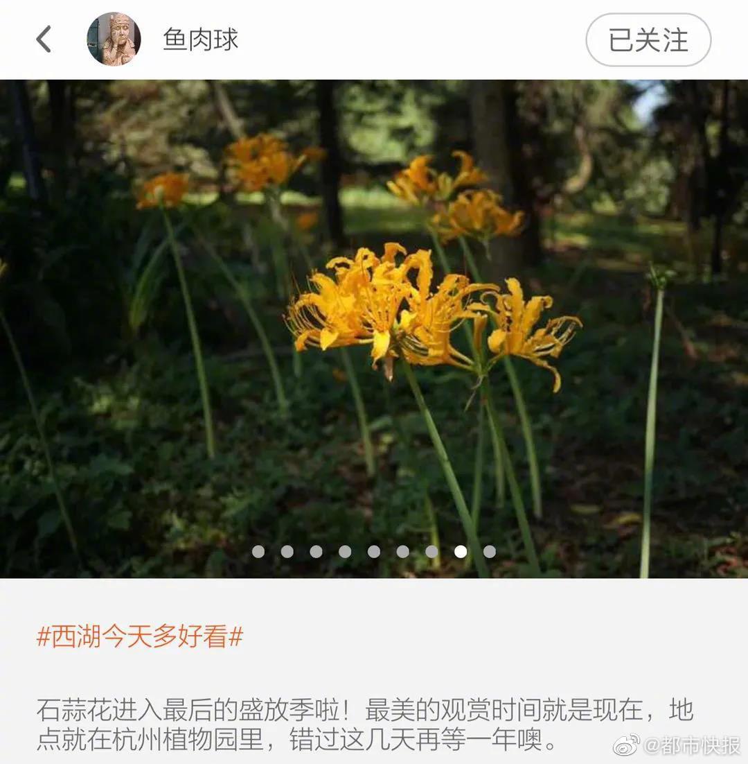 杭州植物园彼岸花最美的观赏期是现在