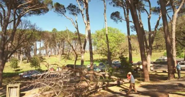 警告!南非约堡居民因非法砍伐树木被罚款100万兰特
