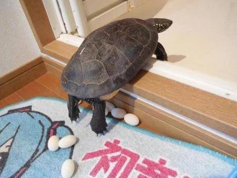 大学生8个月后返校乌龟还活着 因寒假前乌龟进入冬眠