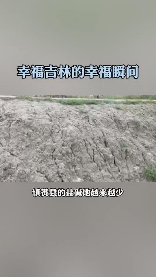 镇赉县的盐碱地越来越少,水稻收成越来越好……