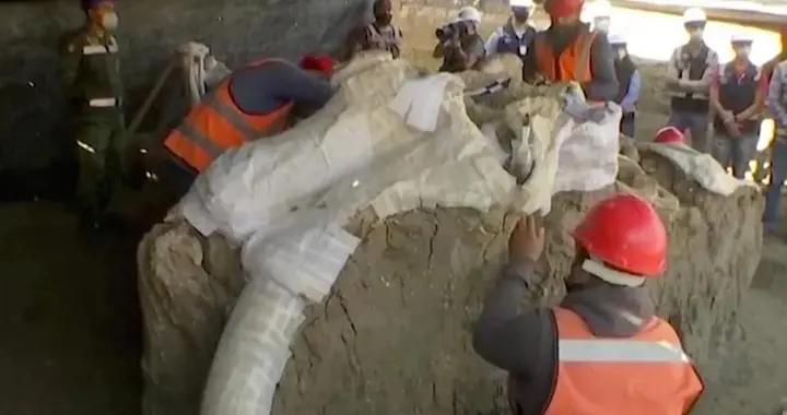 墨西哥一建筑工地发现古老湖床,其中挖出200头冰河时期猛犸象