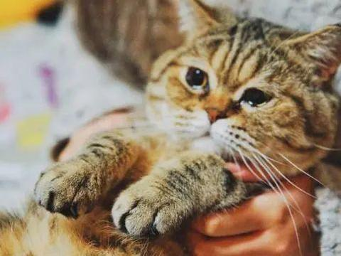 猫被气哭了,原因是邻家猫咪闯进家里,吃它的猫粮,用它的猫砂