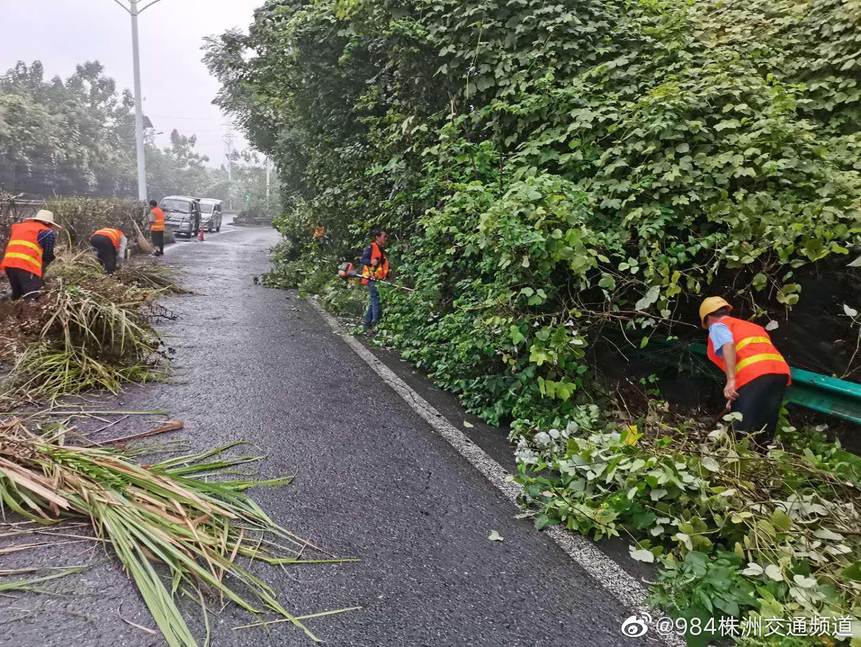 石峰区城管局组织修剪红易大道沿线绿化树木