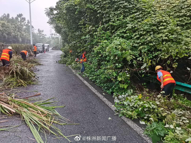 石峰区城管局修剪红易大道沿线绿化树木