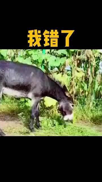 当非洲二哥碰上中国二驴,到底谁才是食肉动物?