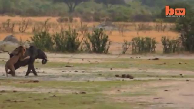 男子发现一只和妈妈走散的小象,接下来让人倍感心痛!