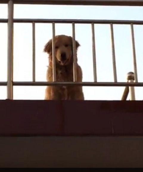 金茂站在阳台前微笑迎主 那人看清楚之后