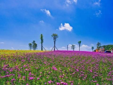 贵州六盘水野鸡坪,感受万亩花海和露营的好地方