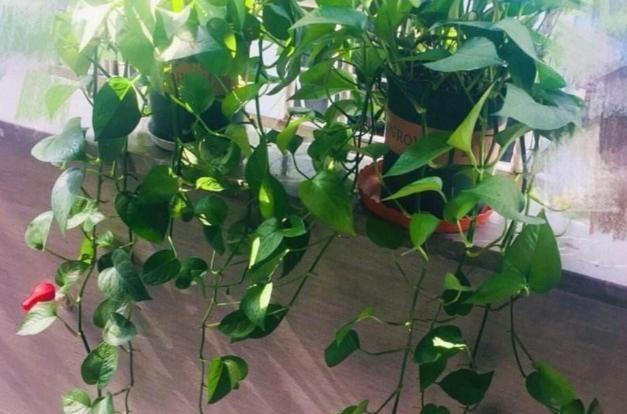 如何让刚度过休眠期的植物快些适应新环境?做到2点,顺利越秋